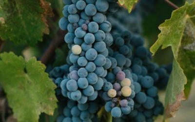 The Nivernais vineyards
